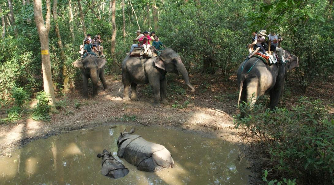 Elephants carry tourists through the forest during a trek in Nepal